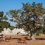 B&B La Gufa | Trulli and Nature